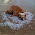 Summer Heat!